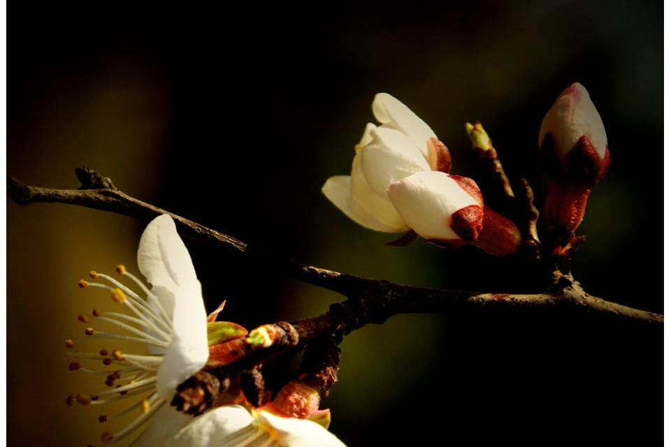 花儿开了——诗画摄影