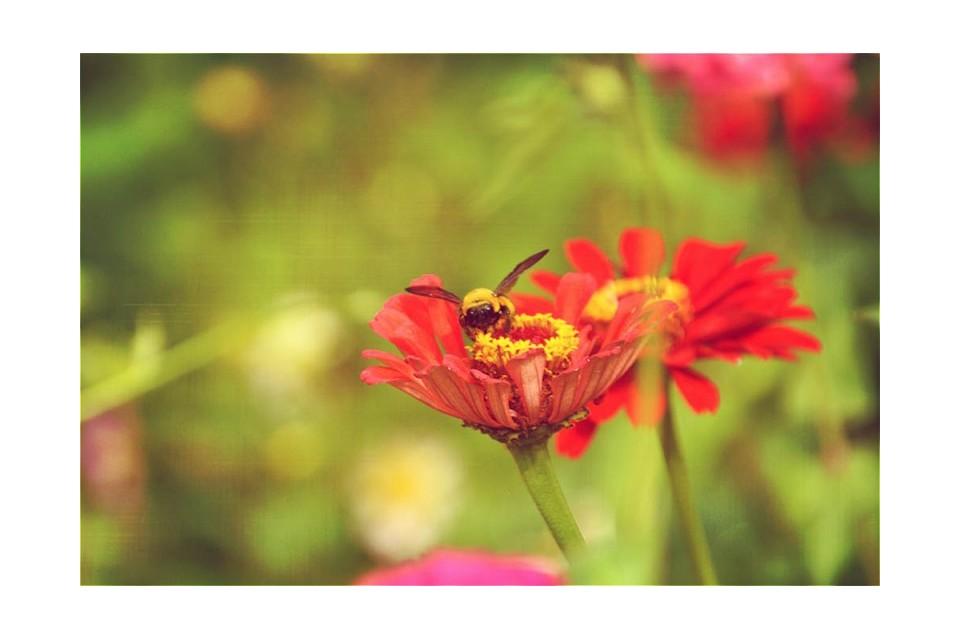 涞源山间怒放的野菊花