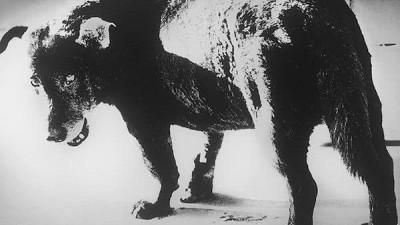 """像狗又像海参:日本摄影大师森山大道和他的""""街"""""""