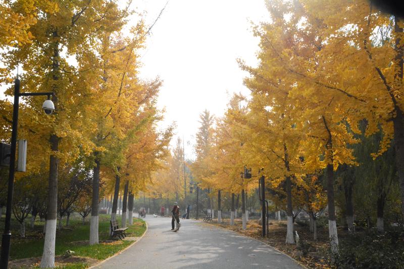 南海子公园——缤纷秋色浓于染
