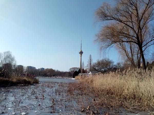 冬日暖阳下的玉渊潭公园——李月手机拍图