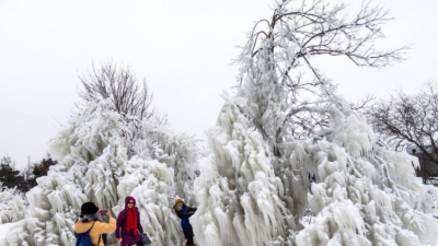 """极地涡旋""""席卷美国 芝加哥树木成冰雕"""