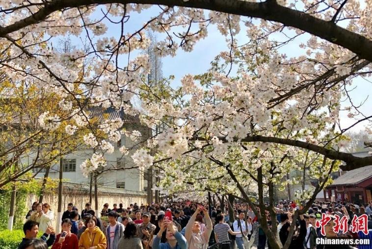 人人人!赏樱游客