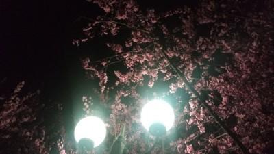 淡紫明黄白似云——李月手机拍图