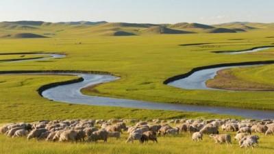 草原返青 鲜花盛开 内蒙古全面进入旅游旺季