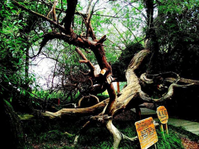 笑琰摄影:天山神木园(新疆阿克苏地区温宿)