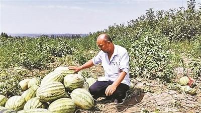 """村民误信谣言""""哄抢""""万斤西瓜 瓜农损失3万余元"""