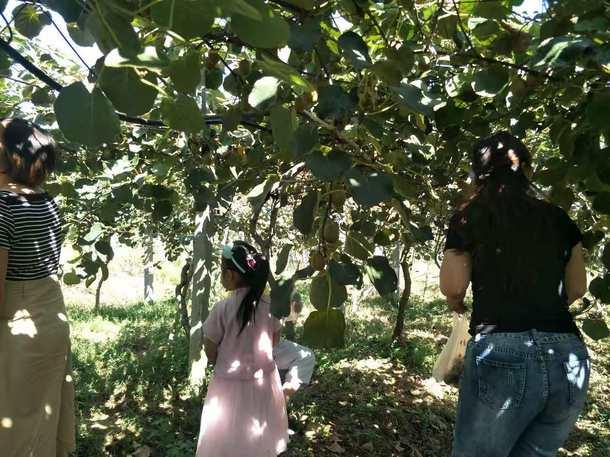 安徽太湖县春草爱心联盟慈善协会会员走进金梦湾生态农庄