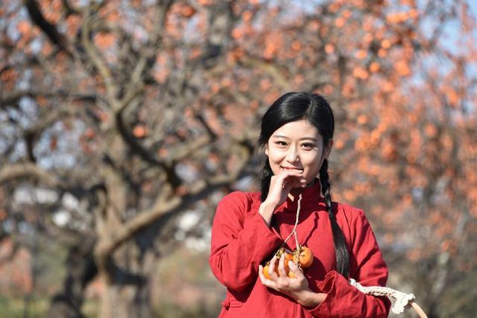 陕西彬州:柿子红了