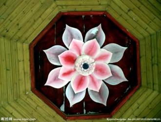 """莲花为何会成为佛教的""""圣物"""""""