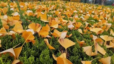 苏安良: 春天的落叶