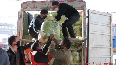 """河南鲁山:村民有序赶种 自发捐赠蔬菜给战""""疫""""一线"""