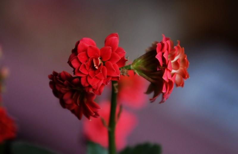 办公室的花儿开了——靳新国摄影