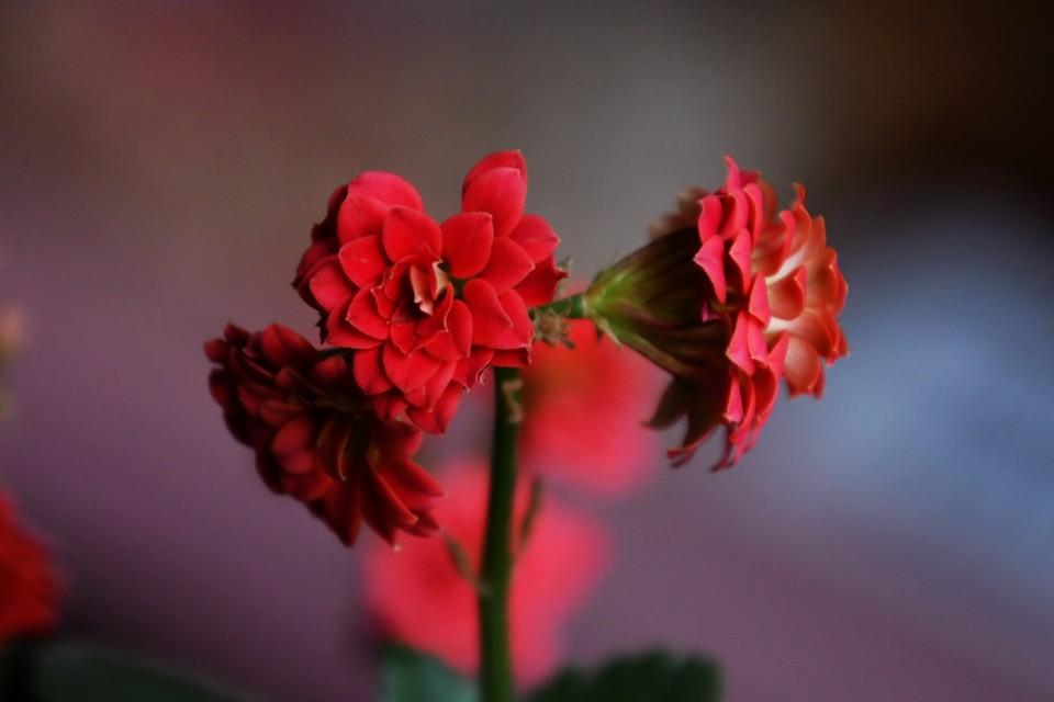办公室的花儿开了——靳新国摄影诗画