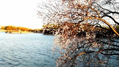 春光烂漫颐和园