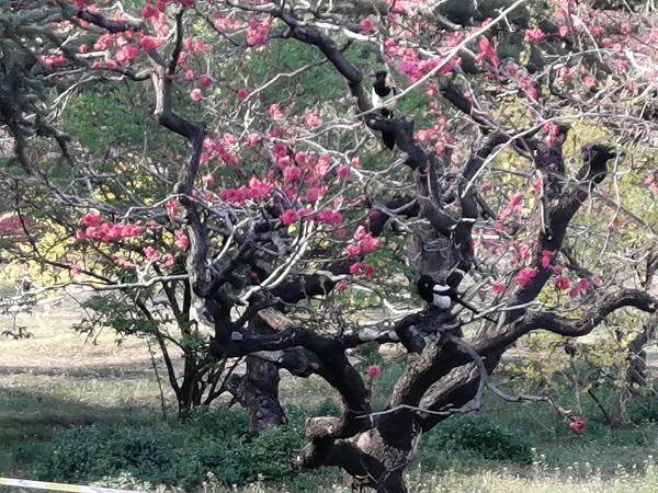 李月手机拍图——北京植物园的春天