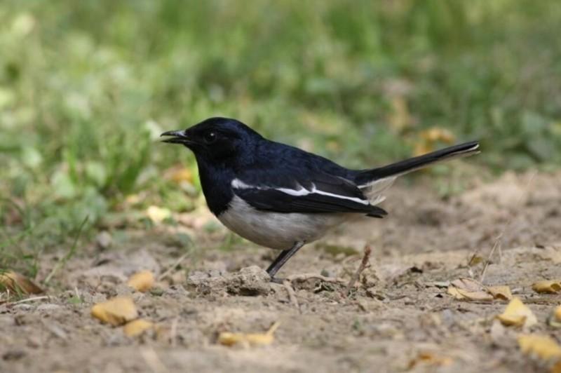 四川23年间新增135种野生鸟类 鸟类新分布记录多由观鸟者发现
