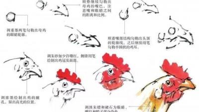 中国画中鸡的各个部分画法学习