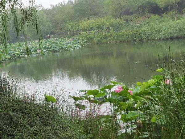 丁育春手机拍图——大运河森林公园的花