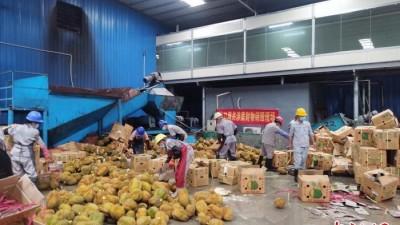 广西水口海关无害化销毁18.88吨涉嫌走私入境水果