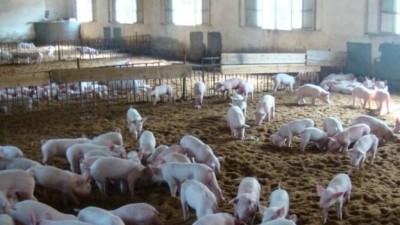 占用基本农田建养猪场?专家:操作过程经不起推敲