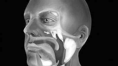 科学家发现人体新器官咽鼓管唾液腺 对癌症治疗中减少副作用具有重要意义