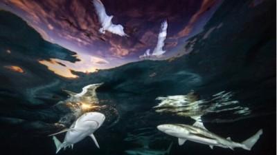 年度水下摄影师比赛 2021 得奖作品赏