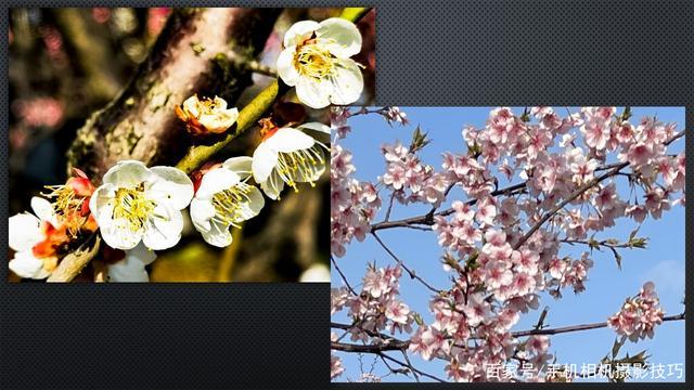 春花盛开,手机怎么拍?记住这4条秘诀,就能出大片!