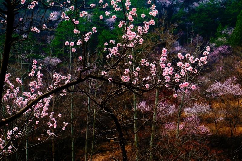 孙建军摄影:大山里的春天