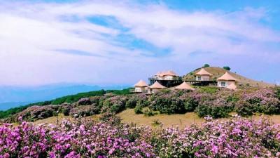 贵州乌蒙大草原万亩杜鹃花绽放 迎来最佳观赏期