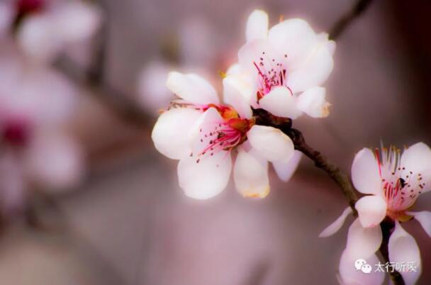风花雪月伴他行——读王兴舟《梦里有几朵花儿在开》遐想