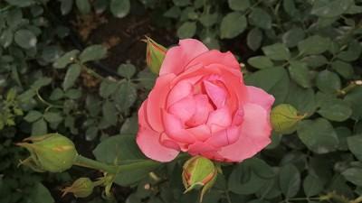 百草园中花盛开——李月手机拍