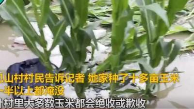 强降雨后,河南有村庄玉米或面临绝收