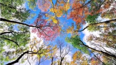 秋季最实用摄影技巧,快学习了!