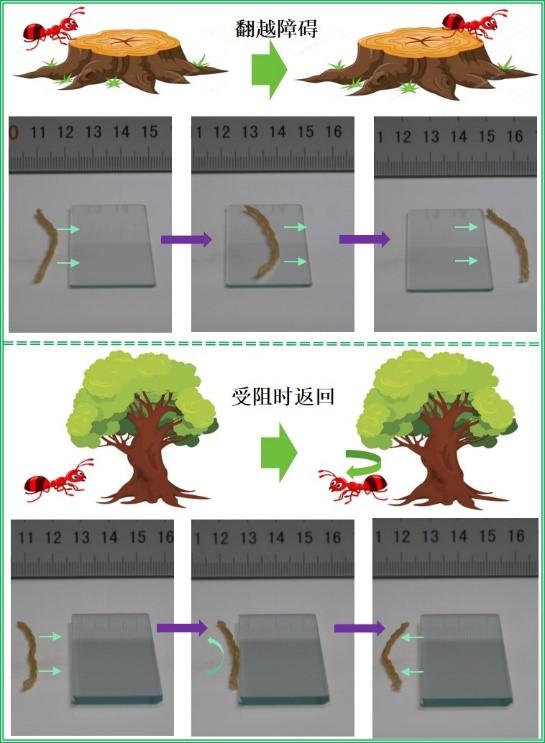 天津大学研发4D打印仿生触觉应变自主软体机器人