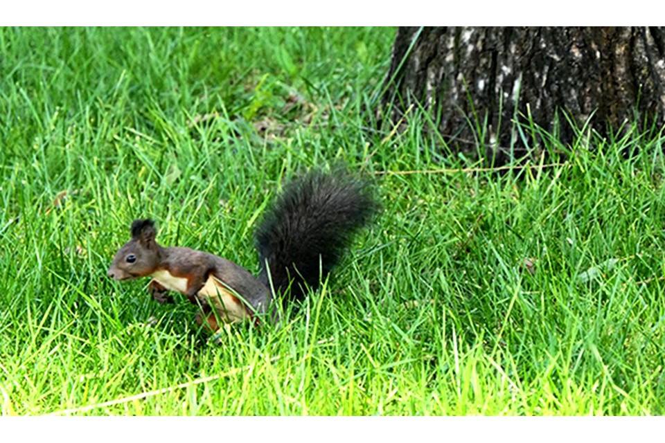 圆明园邂逅小松鼠